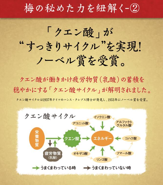 クエン酸が働きかけ疲労物質(乳酸)の蓄積を穏やかにする「クエン酸サイクル」が解明されました。