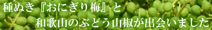 種ぬき ぶどう山椒『おにぎり梅』